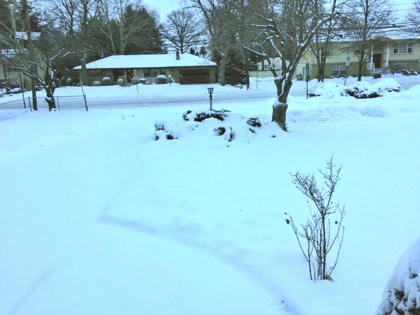 Snow share